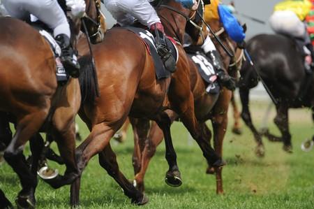 carreras de caballos: Un campo de caballos y jinetes durante una carrera.