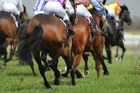 horse races: Un campo de caballos y jinetes durante una carrera.