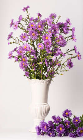 Bouquet of small garden asters in a vase on a white background.