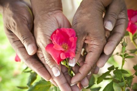 Close-up van senior African American man en vrouw paar handen die een rode roos bloem in een zomertuin