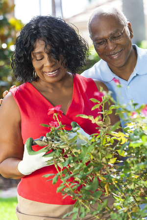 A happy senior African American man and woman couple in their sixties outside gardening in the garden together smiling cutting roses photo