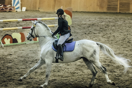 sports complex: young female rider on white horse during show jumping competition at sports complex indoors