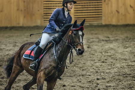sports complex: Chelyabinsk, Russia - November 22, 2015: closeup young girl rider on horseback on field at sports complex during Competitions Horse Show jumping