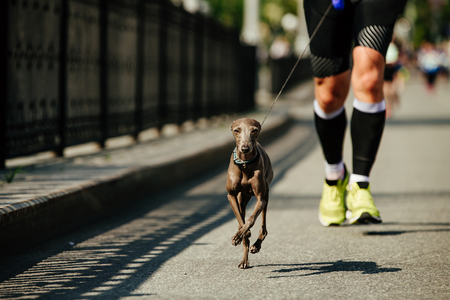 male runner running with dog greyhound on leash city race