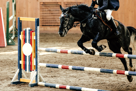 competition for equestrian sport equestrian on horse jumping obstacle Imagens