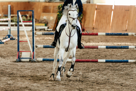 show jumping competition riding woman equestrian event