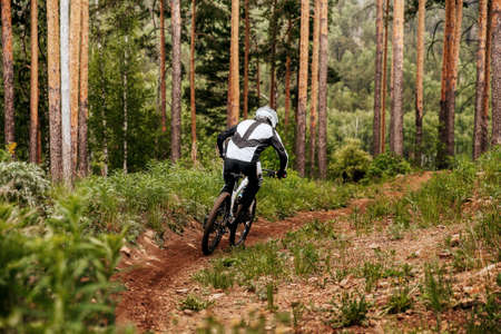 back downhill mountain rider rides on trail in pine forest