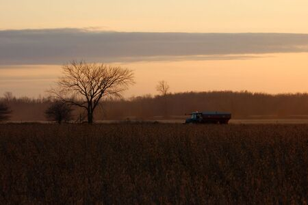 A lone tractor makes its way through a field of soybeans to meet a combine in the early evening of a Canadian harvest. photo