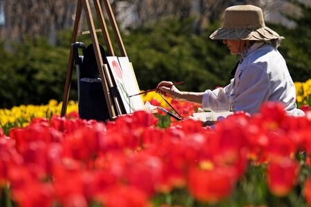 majors: Ottawa Ontario Canada. May 2011. Denise Levesque paints at the National Tulip Festival. The festival began when the Dutch Royal family donated 100,000 tulip bulbs to Canada in appreciation of providing a safe house to its family during World War 2.