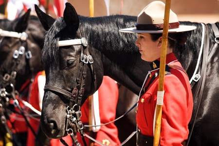 Ottawa Ontario Canada. May 2011. Each year before they start their tour, the RCMP musical ride performs an Inspectors Review, once approved they commence their summer tour.