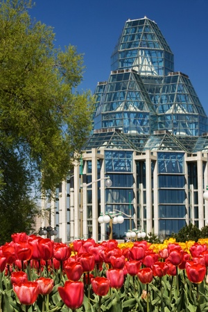Ottawa Ontario Canada. May 2011. The National Tulip Festival in Canada`s capital city. The festival began when the Dutch Royal family donated 100,000 tulip bulbs to Canada in appreciation of providing a safe house to its family during World War 2.  Stock Photo - 9690443