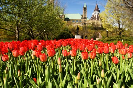 Ottawa Ontario Canada. May 2011. The National Tulip Festival in Canada`s capital city. The festival began when the Dutch Royal family donated 100,000 tulip bulbs to Canada in appreciation of providing a safe house to its family during World War 2.