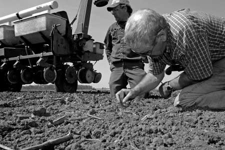 Parkhill, Canada - May 4, 2006: A Canadian farmer measures the depth of a seed that was just planted. The seed needs to be an exact distance into the ground. Too deep and it won