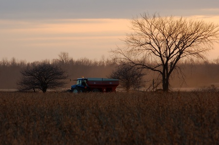 Parkhill Ontario, Canada - November 4, 2006. A tractor and wagon head out into a field to unload a combine during fall harvest in Canada.