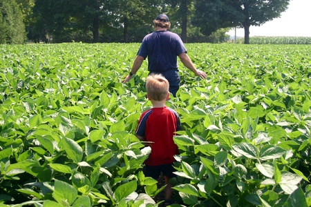 Parkhill Ontario, Canada - August 1, 2006. A young boy follow his father into a field of soybeans on a family farm in southwestern Ontario.
