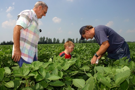 a generation: Parkhill Ontario, Canada - August 1, 2006. Learning on a family farm starts at a young age. Here a young boy is shown a crop of soybeans by his father and grandfather. The family has farmed this land in Southwestern Ontario for more than 100 years.