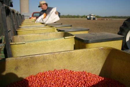 Parkhill Ontario, Canada - May 9, 2006. A planter bin full of treated corn seed.