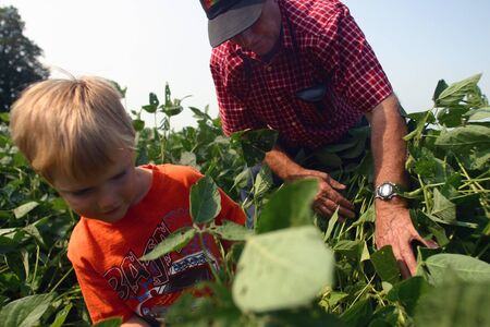 southwestern ontario: Parkhill Ontario, Canada - September 7, 2006. A young farm boy is shown how to evaluate a crop by his grandfather on a family farm in Southwestern Ontario.