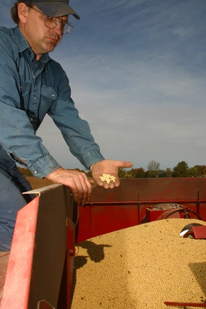 southwestern ontario: Parkhill Ontario, Canada - October 10, 2006. Rick Willemse inspects a sample of freshly harvested beans.