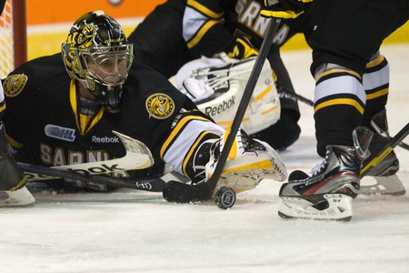 London Ontario, Canada - October 30, 2011. Sarnia Sting goalie Brandon Maxwell stretches to smother a puck in a game against the London Knights. London won the game in an overtime shootout 3-2.