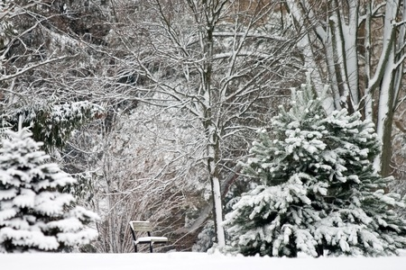 A park bench and trees are covered with a fresh blanket of snow.  Stock Photo - 11300405