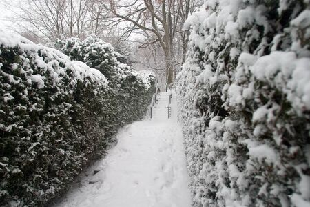 A walkway and bushes are covered with a blanket of fresh snow. Stock Photo - 11300408