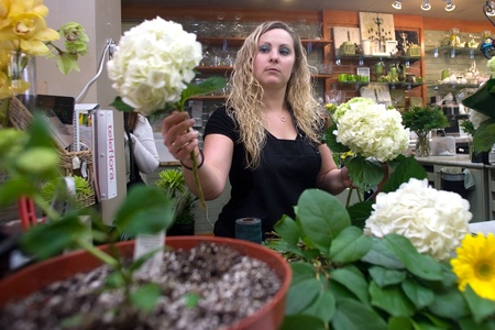 London Ontario, Canada - April 3, 2012.  Lauren Schell, 27, prepares a bouquet of flowers for sale inside Boxwoods. Owned by David Friesen, 49, Bowood's is located on Richmond Row.  As a florist Friesen and his staff will often spend between four to six h Stock Photo - 13022740