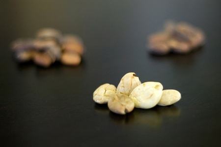 London Ontario, Canada - April 5, 2012. Rare Albino cocoa beans are displayed with their traditional darker beans behind.