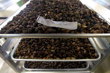 London Ontario, Canada - April 5, 2012. Trays of roasted cocoa beans sit waiting to be crushed.  新聞圖片