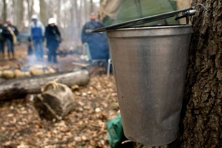 London Ontario, Canada - March 3, 2012.  With ceremonial tapping of the first tree complete, sap begins to drip from the trunk and into the collection bucket. Stock Photo - 13073184