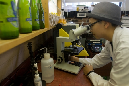 brewery: Toronto Ontario, Canada - June 5, 2012. Trish Yee, quality assurance technican uses a microscope to assess the viability of a yeast sample. Located in a former Canadian Pacific Rail steam locomotive roundhouse, Steam Whistle brewery produces an average of