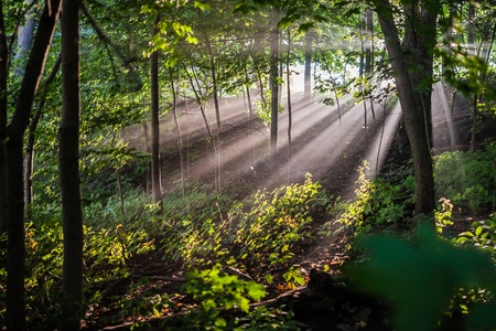 A colour landscape photo of morning sunburst shining through early morning mist