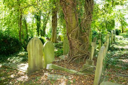 spooky graveyard: Graveyard outdoor