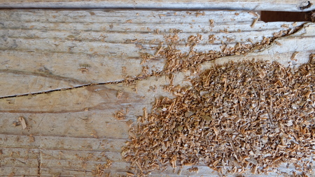 and cellulose: sawdust and wood