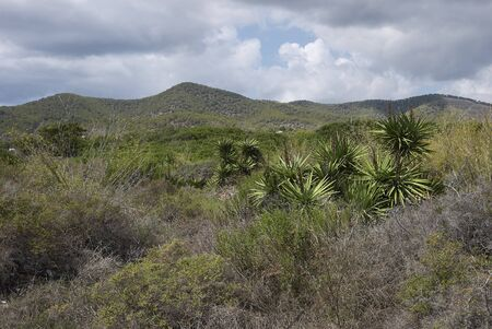 Ibiza island landscape with Yucca aloifolia plants Banco de Imagens - 135273505