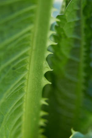 Dipsacus fullonum fresh plant close up Banco de Imagens