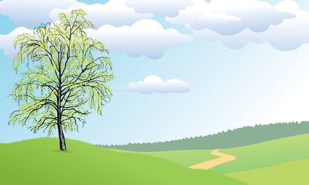 copse: The lonely tree a birch costs on a green hill. Illustration