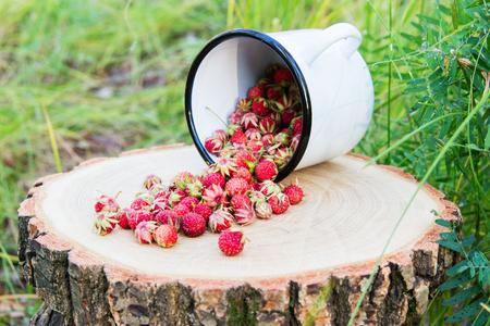 Wild strawberry on stump on green background. Stock Photo