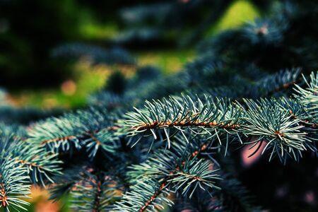 cosily: Beautiful christmas tree on blurred background. Stock Photo