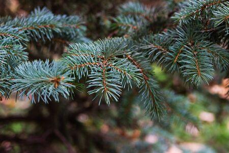 cosily: Beautiful christmas tree bokeh background. Stock Photo