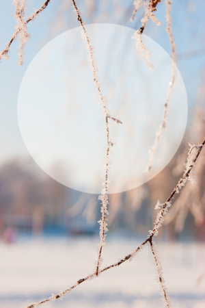 Scenic winter background with circle for text.