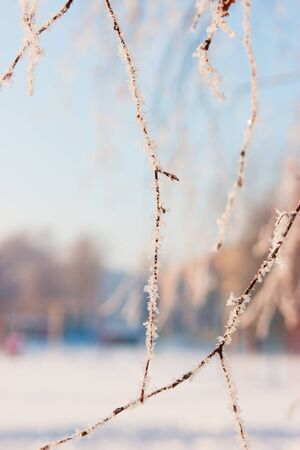 Scenic forest landscape daylight outdoor branches snowy. Stock Photo