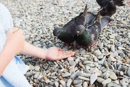 Kind Child kid hand feeding dove stone beach summer.