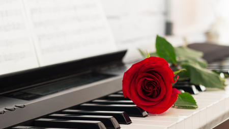 Single rose piano keys romantic music background.