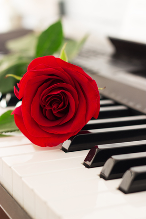 Red single rose piano keys romantic music background.