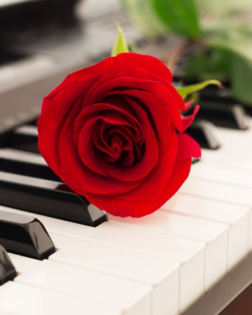 Red rose piano keys romantic music background.