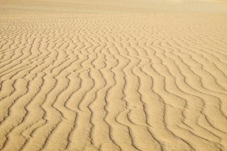 sand dune: Sand dune in Fuerteventura.