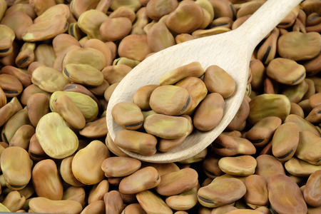 windsor: Dried broad beans on a wooden spoon. Can be used as a background. Stock Photo