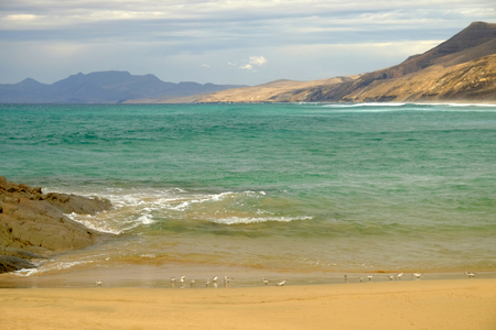 Beautiful view on the famous beach Cofete with small seagulls on the beach, the lagoon with green water, golden sand and mountains on the Canary island Fuerteventura, Spain.