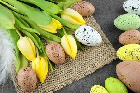 glower: Easter colorful quail eggs and yellow tulips on sackcloth and dark background.